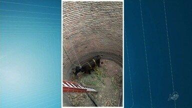 Corpo de Bombeiros resgata vaca que caiu numa cacimba vazia - Caso aconteceu na zona rural de Cariús.