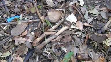Ossada humana é encontrada em mata perto do Residencial Salvação - Os moradores afirmam que os ossos são de um adolescente que está desaparecido há um mês.