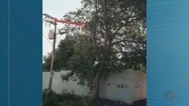 Corte de árvore é realizado no Jardim Martins, em Franca - De acordo com a CPFL e Prefeitura, árvore teria sido plantada de forma irregular.