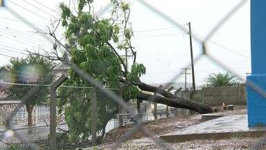 Chuva forte derruba árvore e alaga ruas em Ponta Grossa - Arroio da Ronda também subiu mais uma vez e invadiu a BR-376.