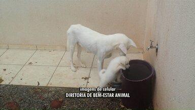 Morador de Maringá é multado em R$2 mil por maus-tratos a cachorros - De janeiro até a agora, foram registradas quase 700 denúncias por maus-tratos contra animais na prefeitura de Maringá.