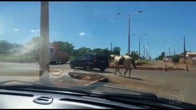 Motorista é filmado arrastando cavalo amarrado a carro, em Luziânia - Vídeo mostra que animal estava preso por uma corda e chega a se desequilibrar quando condutor arranca. Polícia Civil informou que vai apurar o caso.