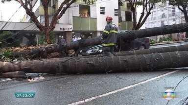 Veja como pedir o corte ou a poda de árvore em BH; assista a entrevista - Em outubro, um taxista morreu depois que uma palmeira caiu sobre o carro em que ele estava.