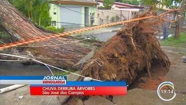 Chuva causa estragos em São José - Árvores caíram.
