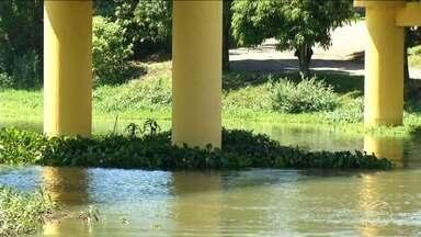 Plantas aquáticas comprometem ecossistema e estrutura de pontes - Segundo a prefeitura de Resende, situação é constantemente monitorada.