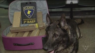 Cães do BAEP encontram tabletes de maconha na rodoviária do Guarujá - A droga estava escondida em uma mala que saiu do Jabaquara, em São Paulo.