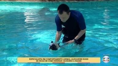Alexandre Rossi dá dicas para ensinar seu cachorro a nadar - Alguns animais já têm o instinto, mas é preciso ter cuidado com os que não sabem nadar e podem até se afogar em piscinas. Conheça o casal que tem uma piscina em casa para seus 9 cachorros se refrescarem no calor
