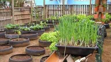 Produtos de horta cultivada em pneus em Arraial do Cabo, RJ, são doados para a Apae - Assista a seguir.