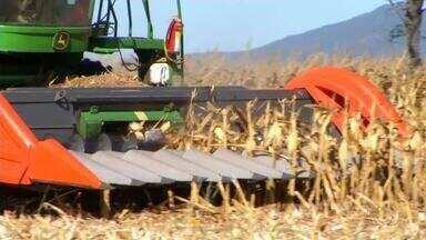 Brasil mais que triplica exportações de milho até novembro - Brasil mais que triplica exportações de milho até novembro