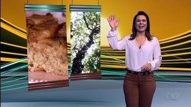 Confira o que é destaque no Jornal do Campo de domingo (3) - Entre os destaques está uma saborosa receita de bolo de abacaxi.