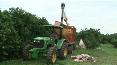 Censo agropecuário mapeia propriedades rurais - A pesquisa rural vai até fevereiro de 2018