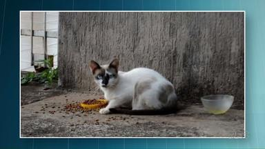 Homem é preso por tentar matar gato com um revólver - O caso aconteceu em Umuarama. Segundo a polícia, o bicho entrou na casa do homem para comer a comida de dois gatos que ele tem.
