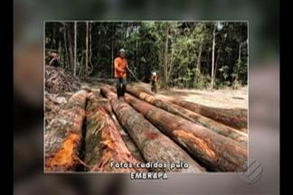 """MP recomenda ao Ibama que adote medidas de combate a ações criminosas em assentamento - Assentamento """"Virola Jatobá"""" fica em Anapu, sudoeste do Pará."""