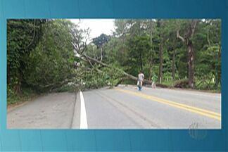Queda de árvore interdita rodovia Mogi-Guararema por uma hora - Acidente foi na altura do quilômetro 66, perto do Distrito de Luís Carlos.