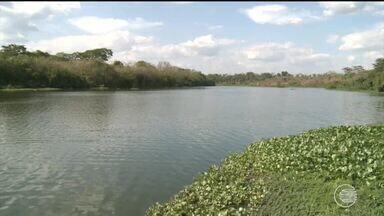 Aguapés de Teresina ainda resistem e mostram poluição no Rio Poti - Aguapés de Teresina ainda resistem e mostram poluição no Rio Poti