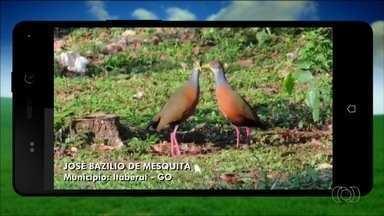 Telespectadores enviam imagens para o Jornal do Campo - Destaque para foto registrada na cidade de Itaberaí na fazenda Santa Luzia.