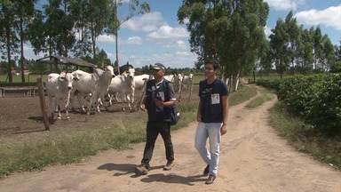 Pesquisadores do Censo Agropecuário já visitaram quase metade dos estabelecimentos na BA - Meta do IBGE é comparecer a 760 mil locais, até fevereiro do ano que vem.