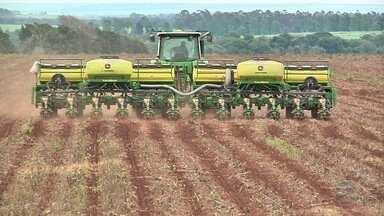 Excesso de chuvas atrapalha plantio do algodão em MT - Começo do cultivo está mais lento que o previsto em algumas regiões do estado.