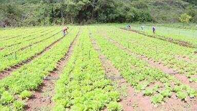 Produção de hortaliças sofre redução no Centro-Oeste de Minas - Queda significativa tem levado agricultores a buscar por produtos em outros estados.