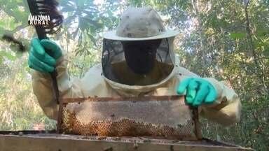 Cresce produção de mel no Sul de Rondônia - Reação é atribuída ao equilíbrio climático.