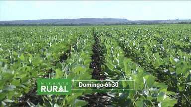 Confira as notícias em destaque no Mirante Rural - Programa apresentado todo domingo pela TV Mirante mostra as novidades do campo e do agronegócio.