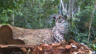 Fundo Amazônia recebe R$ 271 milhões recursos para preservação florestal - Fundo foi criado para captar recursos financeiros para preservação e uso sustentável da floresta.