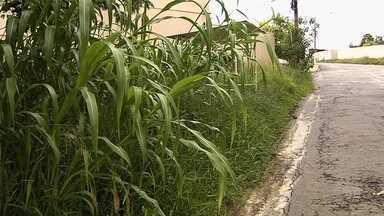 Moradores reclamam de mato alto no Parque das Laranjeiras, em Goiânia - População reclama de problemas na segurança por conta da falta de roçagem.