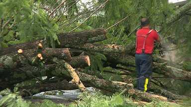Árvore cai e bloqueia rua do Jardim Leonor - Bombeiros passaram a tarde cortando galhos e troncos para desobstruir a rua.