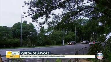Árvore de grande porte interdita alça de acesso à Ponte Cidade Universitária - Queda ocorreu na madrugada desta quarta-feira (27)