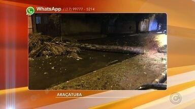 Temporal causa transtornos em Araçatuba - Choveu forte em Araçatuba (SP). Segundo o Corpo de Bombeiros pelo menos dez árvores foram derrubadas pela ventania. O trabalho de retirada durou toda a madrugada e continua na manhã desta quarta-feira (27). O temporal durou 30 minutos e não houve registro de feridos.