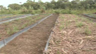 Projeto avalia as preservações de conservação do solo no plantio de cana-de-açúcar em AL - Projeto foi promovido pela Univerdidade Federal de Alagoas.