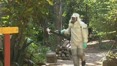 Agentes da Zoonoses fazem nebulização no Parque do Matão em Votorantim - A Prefeitura de Votorantim (SP) iniciou o trabalho de prevenção contra a febre amarela depois que três macacos foram encontrados mortos no Parque do Matão.