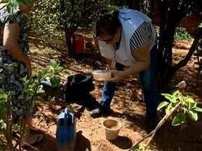 Vigilância Epidemiológica confirma caso de dengue em moradora da Vila Maristela - Agentes iniciaram levantamento de infestação do mosquito Aedes aegypti em Presidente Prudente.