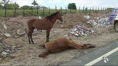 Motociclista morre após colidir contra égua na PE-95, em Caruaru - Animal também não resistiu aos ferimentos e morreu no local.