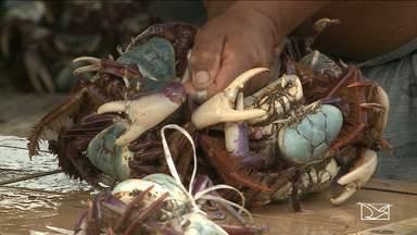 """Tem início período de defeso do carangueijo uçá no Maranhão - Durante a """"andada"""", está proibida a pesca, transporte e comércio irregular do crustáceo."""