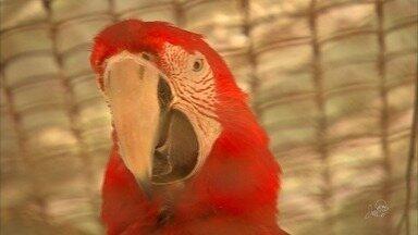 Filhotes de pavão indiano e arara vermelha nascem no zoológico de Fortaleza - Filhotes podem ser vistos pelo público de terça a domingo.