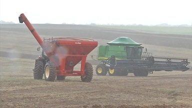 Colheitadeiras ficam paradas no campo a espera de sol forte - Com dias bastante chuvosos, muitos produtores do médio-norte estão com a soja pronta para a colheita, mas não conseguem realizar o trabalho