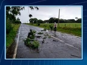 Temporal provoca estragos em Martinópolis - Equipe da Defesa Civil teve de recolher galhos de árvores que caíram sobre a via Rosendo Macedo.