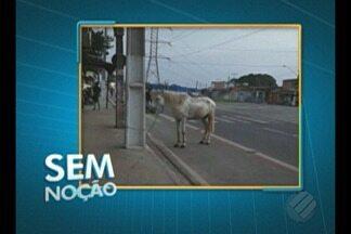 """""""Sem Noção"""" flagra cavalo preso na ciclofaixa da av. Centenário - O animal estava preso em um poste de energia."""
