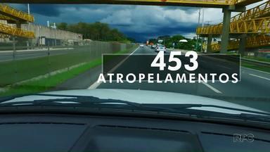A cada três dias, uma pessoa morre atropelada em rodovias federais no Paraná - Dado é da Polícia Rodoviária Federal.