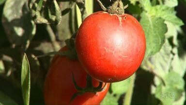 Chuva no estado já reflete os preços de frutas, legumes e verduras - Veja no Caminho do Campo deste domingo (21).
