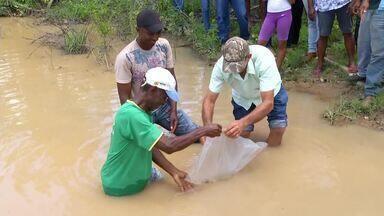 Quilombolas do sudeste do estado devem criar peixes em pequenas barragens - Quilombolas do sudeste do estado devem criar peixes em pequenas barragens