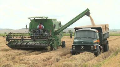 Produtores de arroz de Igreja Nova estão comemorando a colheita da safra - Eles dizem que essa safra foi a melhor dos últimos anos.