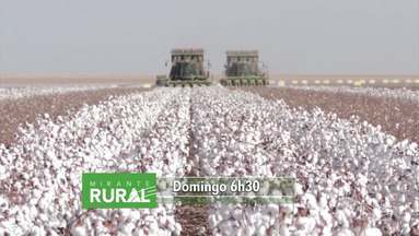 Veja os destaques do Mirante Rural - Programa é apresentado todo domingo pela jornalista Jéssica Melo.