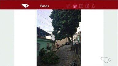 Moradores temem queda de árvore em Cachoeiro, ES - Prefeitura disse que vai mandar uma equipe ao local para avaliar o que pode ser feito.
