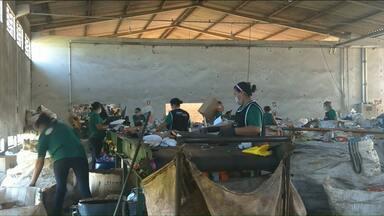 Funcionárias da cooperativa de recicláveis de Umuarama são intoxicadas por veneno - Uma outra trabalhadora chegou a ficar afastada por seis meses pelo mesmo motivo.