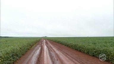 Agricultores do sul de MS se preocupam com excesso de chuva na época de colher soja - A colheita de soja já começou no estado, mas a maioria dos agricultores ainda espera o momento certo para colocar as máquinas no campo.