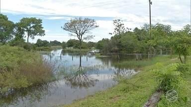 Grande quantidade de chuva causa transtornos aos produtores do Pantanal de MS - Na região de Corumbá, muitas fazendas estão alagadas e criadores calculam prejuízos com a morte de animais.