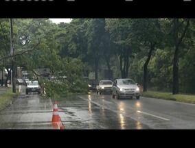 Árvores desabam durante chuvas em Ipatinga - A Defesa Civil orienta que em casos de dúvidas ligar para o número 199.