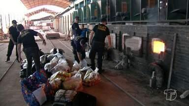 Polícia Federal em Santarém incinera 430 kg de drogas apreendidas em sete meses - Segundo a PF, o montante é do segundo semestre de 2017 e janeiro deste ano. A mais recente operação aconteceu em Monte Alegre, onde a PM apreendeu quase 230 kg de droga.